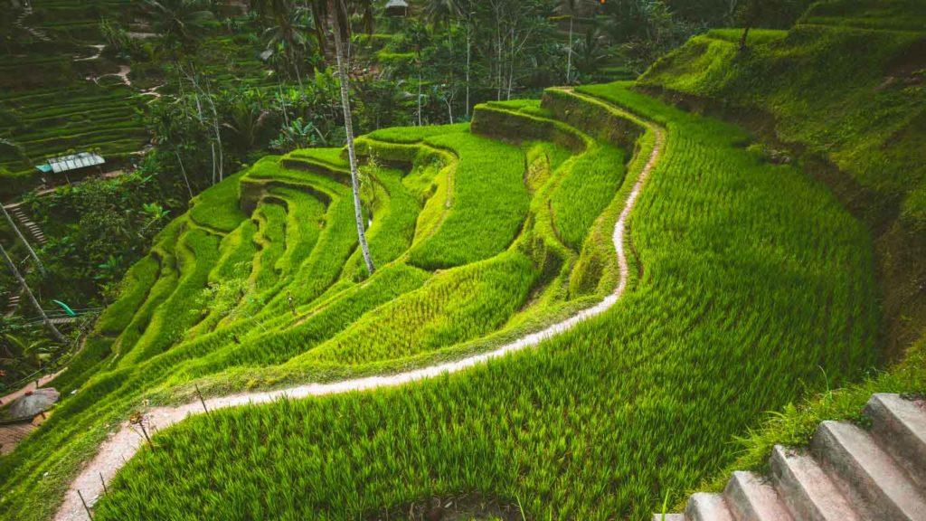 Aventure Bali Lombok - Ubud